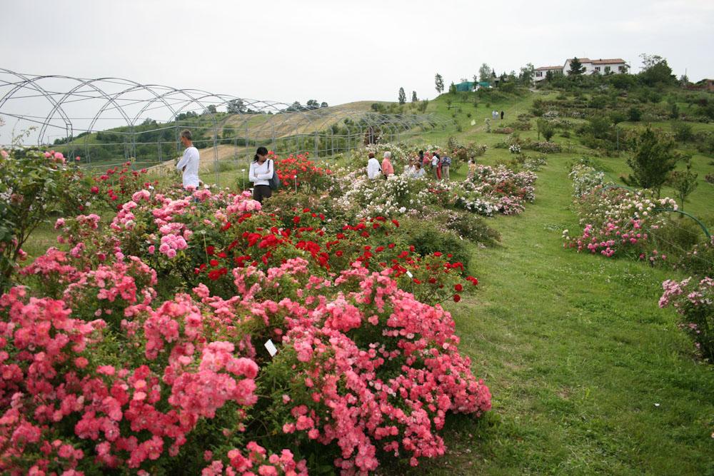 Il giardino delle rose - Il giardino delle rose ...